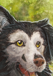 aceo for spocha by kailavmp
