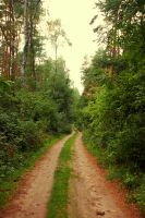 Forest Road 04 by elanordh-stock