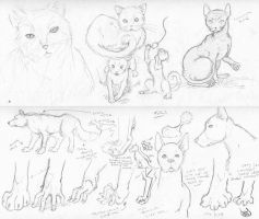 Cats and Dogs by SimonGannon