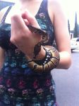 Kaa the ball Python by ChibiEricka