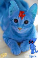 GIFT - Spice The Cat in Real life by AhO4464