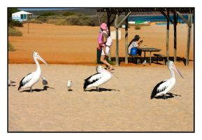 The Three Pelicanos by wolfmagus