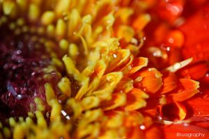 Macro flower 10 by lihualicious