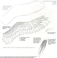 How to Draw Wings by Sablewynd
