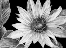 Flower in Charcoal by aLyTeh