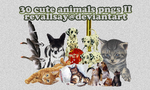 30 cute animals pngs II by revallsay