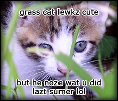 Grass Cat by theawesomelucas