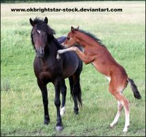 Friendly Mare Foal 14 by okbrightstar-stock