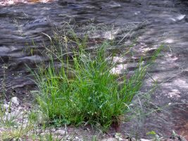 Grass On The Bank 1 by Retoucher07030