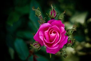 The rose by REI-BCN