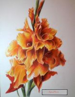 gladiolus by AgnesPterry