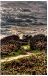 Le chemin by Coraline29