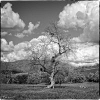 Valley-Tree by DigiPainteR