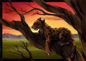 Leopard - Colored by tigon