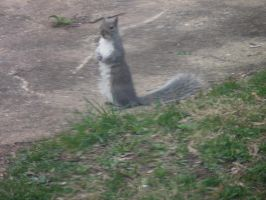 Squirrel said hello by LW-Lucy