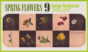 Spring flowers texture pack by Moty-rue