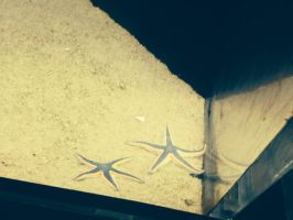 Two Starfish by Red--Vs--Blue