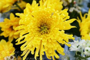 Yellow by HarleeAnne