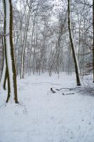 Snowscape Stock 58 by Sed-rah-Stock