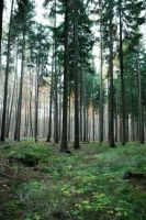 Forest Stock 5 by Sed-rah-Stock