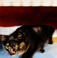 Cat Photo - Movement by MariMcGee