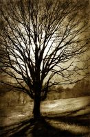 The Tree of Life by AnthonyPresley