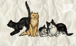 My cats by Irkis