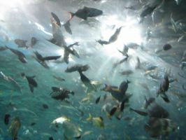 Fishes above by racketcactus