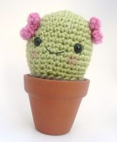 cactus by e1fy