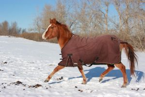 Blanketed horse running through snow 6 by eluhfunt-stock