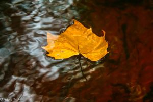 Autumns fall rivers gain by fakeprofileofme