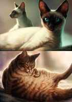 Even more cats by Lhuin