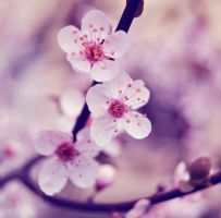 Spring by alina0