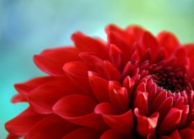 red by whirlingdervishphoto