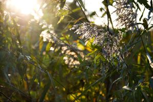 Tall grass by danitzh