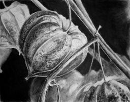 Chinese Lanterns in Charcoal by AgnesPterry