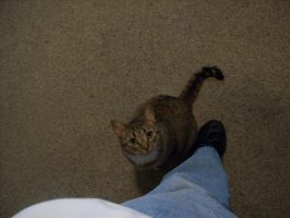 My kitty cat is one of my big babies by Alanna-QueenofHearts