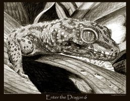 Enter the Dragon 6 by Ellygator