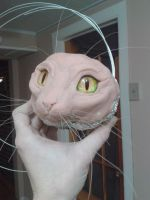 Cat Face Sculpt  - Horsehair Whiskers, Glass Eyes by Heiditruth