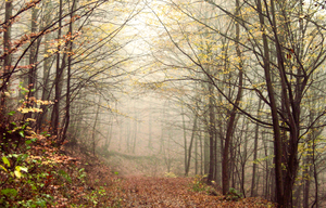 Misty forest by Hawkie111