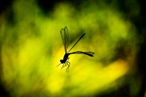 Dragon Fly in Silhouette by dzign-art
