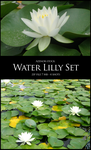 Water Lilly Set by Azenor-stock