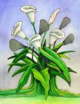 Calla Lillies by deviantmike423