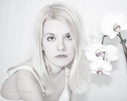 White Orchid by Tommy8250