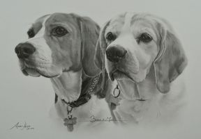 Commission - 2 Beagles 'Boycey' and 'Milly' by Captured-In-Pencil