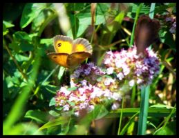 Yellow butterfly by Kayley1590
