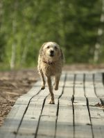 Mixed breed dog 5 by wakedeadman