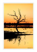 menindee reflection by dannyp5000