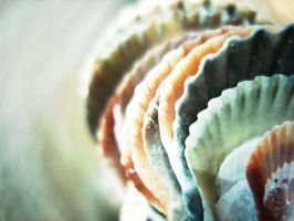 She Sells Sea Shells by redenvelope