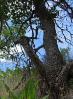 Gnarled Trees by Whimseystock